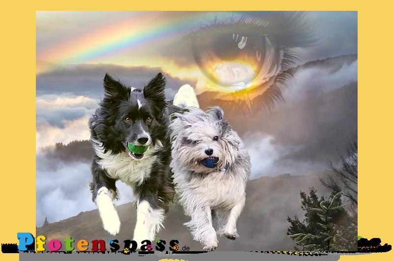 Sammy-Blue-unvergessen-regenbogen-pfotenspass