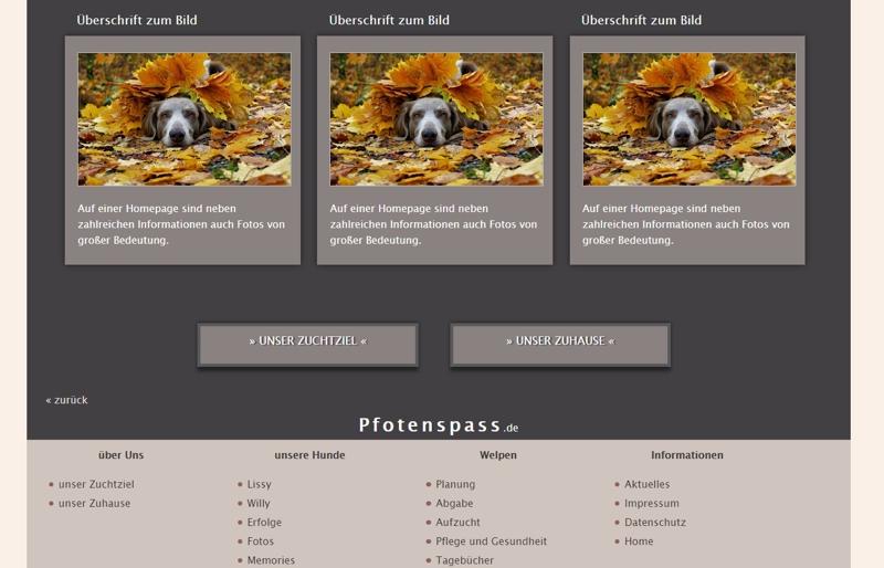 Homepagevorlage-Template-02-30-website2