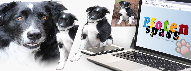 Hunde Fotocollagen Pfotenspass