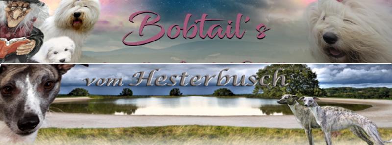 Homepagebanner-Pfotenspass