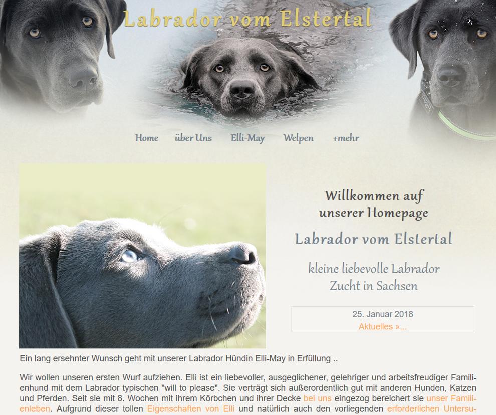 Labrador-vom-Elstertal