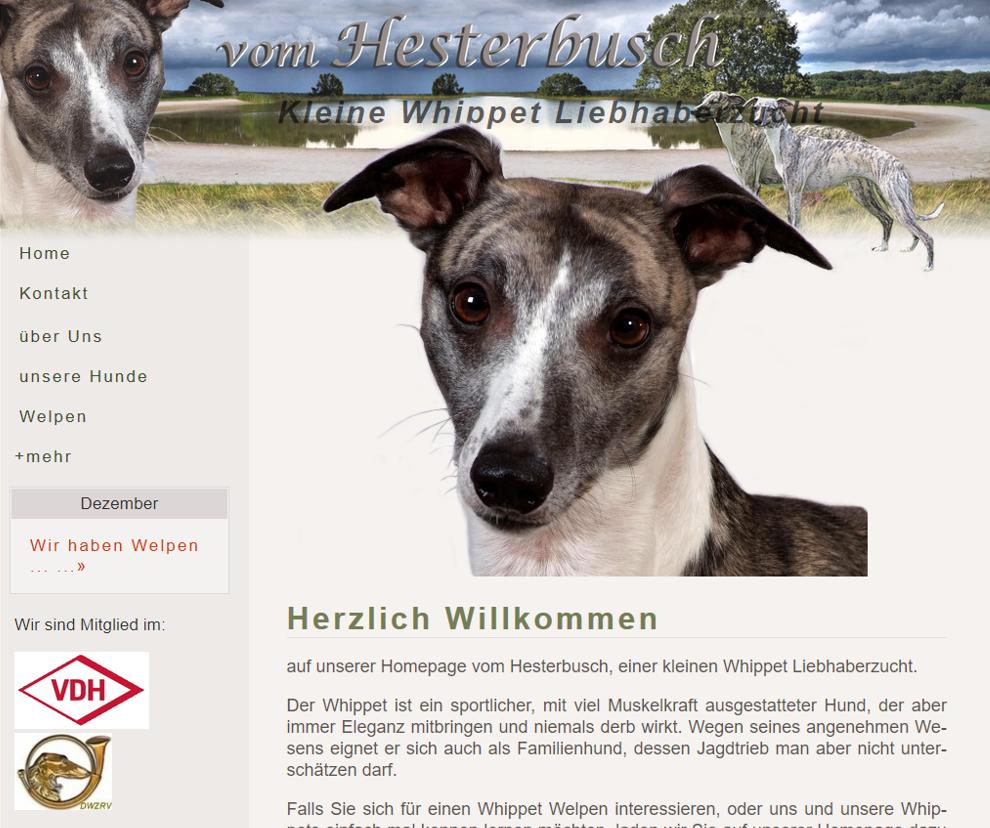 Whippet-vom-Hesterbusch